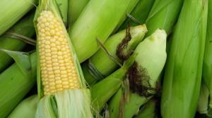 Corn October 31