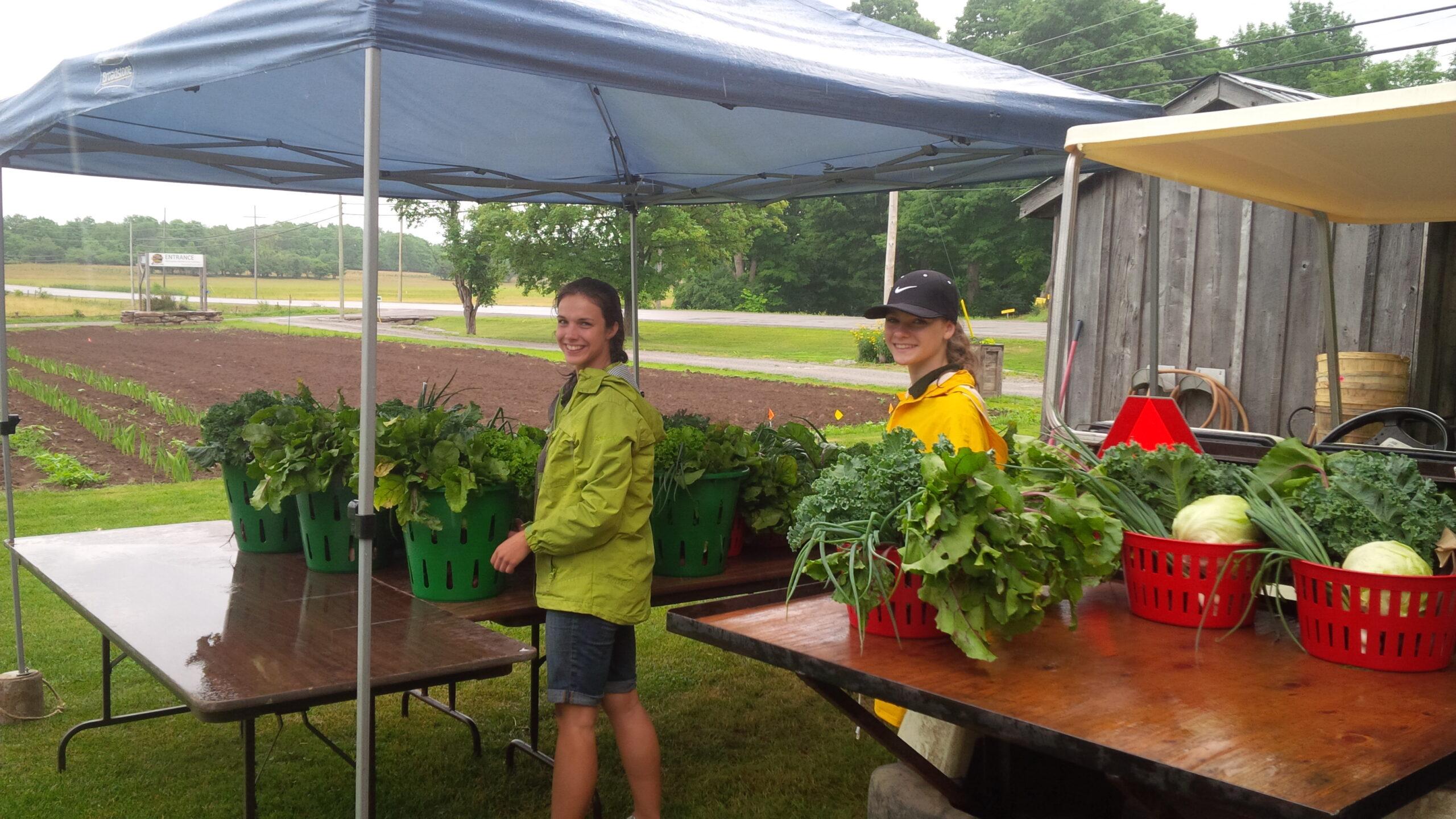 Team Members packing Vegetable Baskets