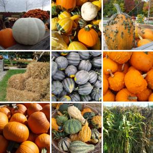 Pumpkins Squash Straw Corn Stalks